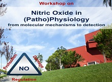 Nitric Oxide in (Patho)Physiology - from molecular mechanisms to detection